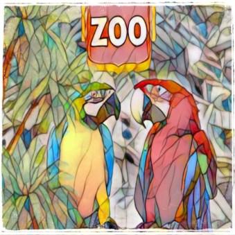 Parrots in zoo birds