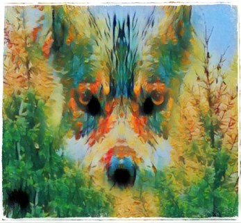Takaya the sea wolf