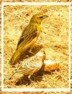 Birds & bread
