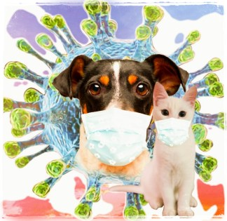 Covid-19 dog & cat