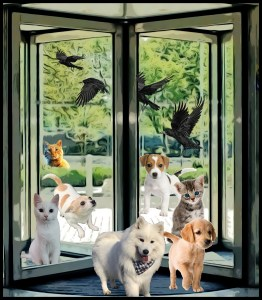 Revolving door with dog and cats