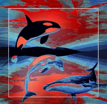 Dolphins & whale