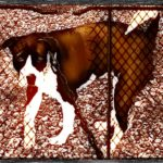 """Dog Fighting Awareness"":  what the ASPCA ignored"