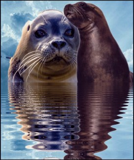 Seal & sea lion