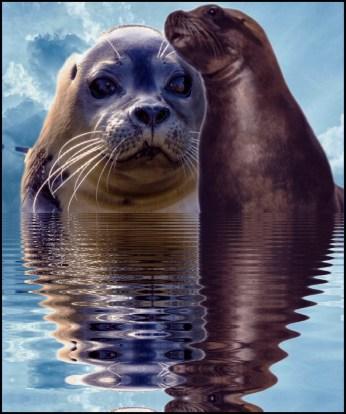 Seal & sea lion