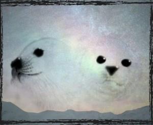 Seals in snow