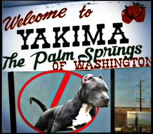 Yakima pit bull