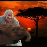 A matriarch remembers, by Daphne Sheldrick,  D.B.E. (1934-2018)