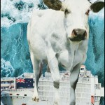 Heifer with New Zealand livestock ship in ocean