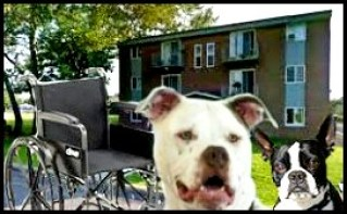 Yakima reaffirms pit bull ban––& suburb reinstates one