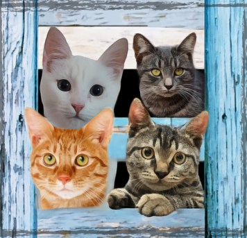 Four kitty cats behind a blue fence