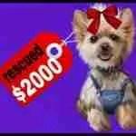 New Best Friends & HSUS execs flunk economic logic that dogs understand