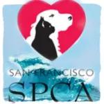 Aftershocks ripple from SF/SPCA (December 2000)