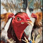 Do chickens mind seeing other chickens traumatized in their presence?