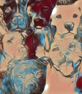 Pit bull collage