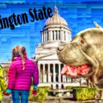 WA undoes pit bull bans that protected humans & animals in 27 cities