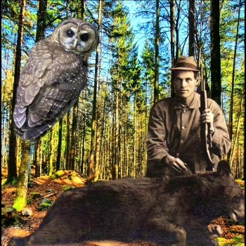 Historical bear and spotted owl hunter