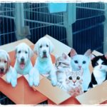 Puppies & kittens everywhere, but none in shelters to adopt