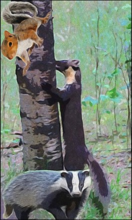 Grey squirrel, pine Martin and European badger in the woods