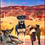 """Navajo Nation:  """"They hid the dogs who killed my daughter!"""""""