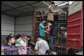 China Animal Protection Power dog rescue