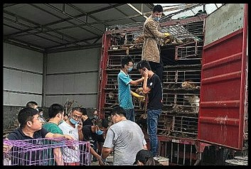 China Animal Protection Power dog rescue