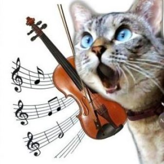 Cat & fiddle