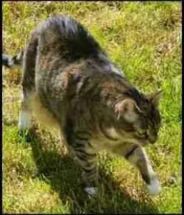 Monkee in yard