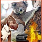 "Koalas, ""world's cutest critters,"" under fire:  logging, disease, cars & pit bulls"