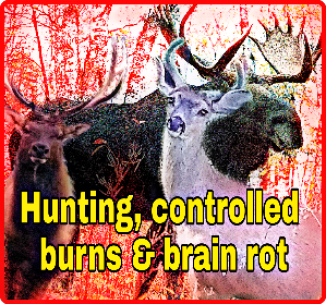 Hunting, controlled burns
