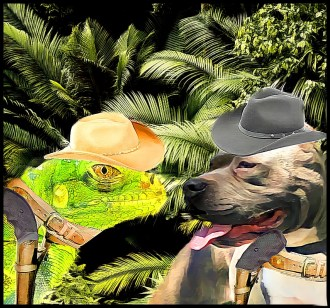 Iguana and pit bull showdown