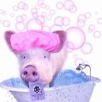 Pig in bath tub