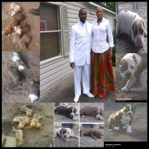 Carnell and Rosy Jackson collage surrounded by bred pit bull puppies