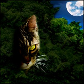Cat in a dark bush in the moonlight