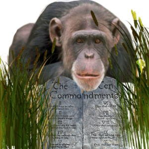 Chimpanzee with stone