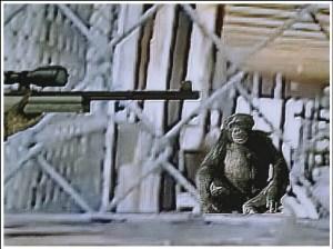 Police shoot Buck the chimpanzee.