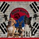 South Korean court rules that killing dogs for meat is illegal