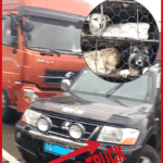 China:  Stopping dog trucks is the easy part.  Saving dogs is harder.