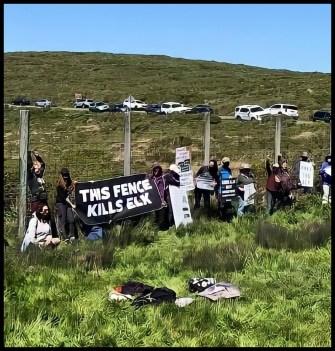 IDA protest for tule elk