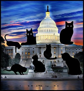 Cats at the capitol by Beth Clifton