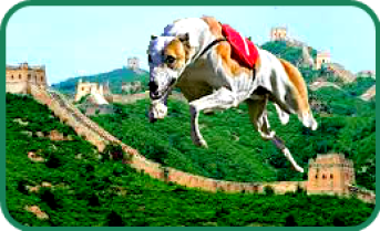 Greyhound escapes from China