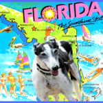 Greyhound racing goes to the dogs in Miami, Macau, & Australia