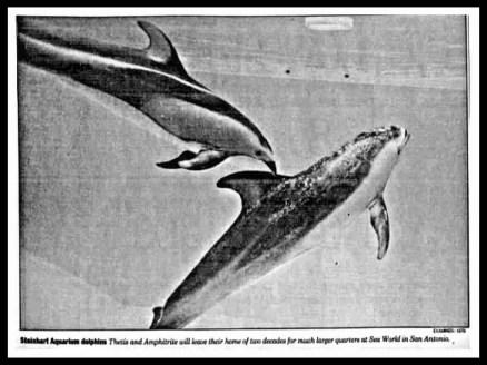 CAS dolphins
