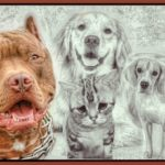 Pushing bully behavior: the ASPCA, Best Friends, & HSUS in Springfield