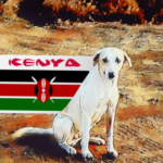 Will Nairobi shoot dogs, vaccinate them, or serve them for dinner?