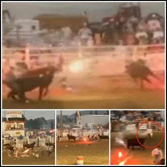 Pioneer Days rodeo shooting fireworks at cows