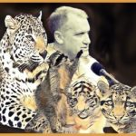 """We can still save them"":  wild cat conservationist Alan Rabinowitz, 65"