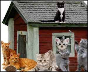 Cats crowding a house