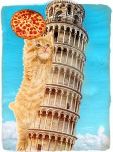 Cat at Pisa