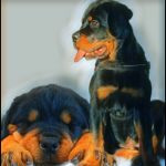Lifelong safe dog advocate could not save mother from Rottweiler